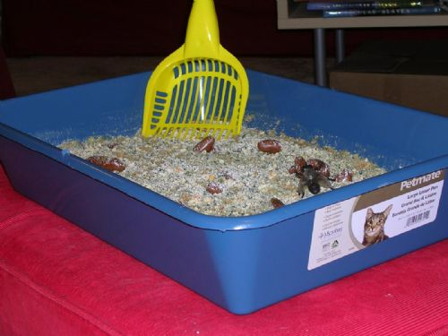 Kitty Litter Spice Cake